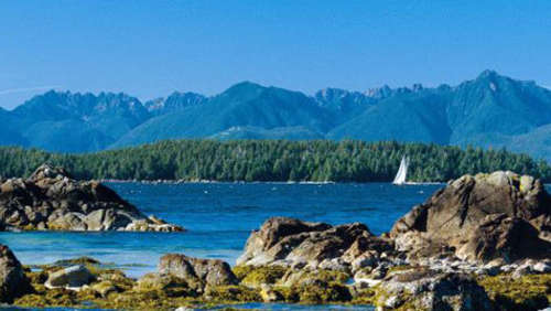 Vancouver Island Grizzlys und Lachse