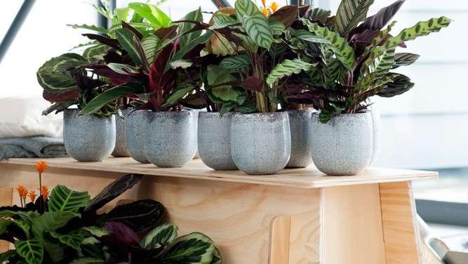 Moderne Grünpflanzen bellandris garten center rosenheim moderne pflanzen stilvoll