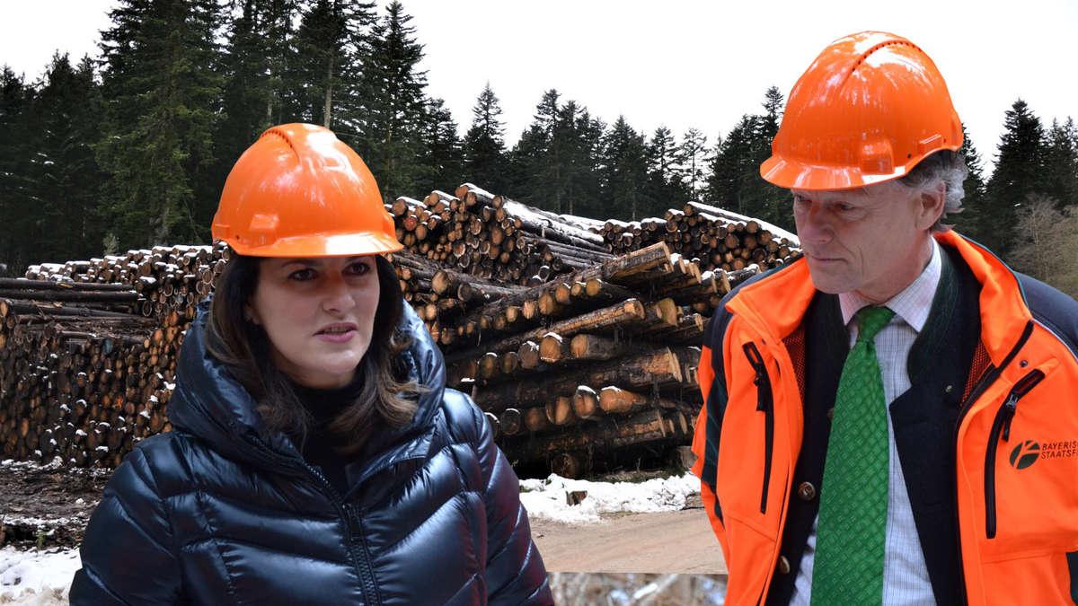 Forstamt Berchtesgaden zieht Bilanz nach Winter: 1,5 Millionen gebrochene Bäume | Anger (Berchtesgadener Land) - innsalzach24.de